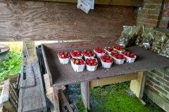 Najlepsie jahody ever