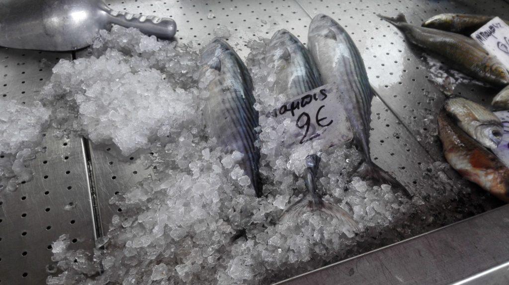 Aká jeto ryba?